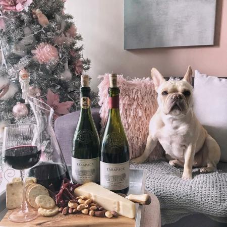 Cozy Christmas Night In Tarapaca Wines